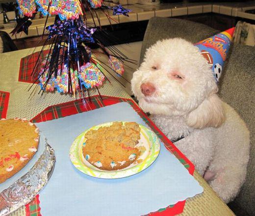 perro-feliz-cumple